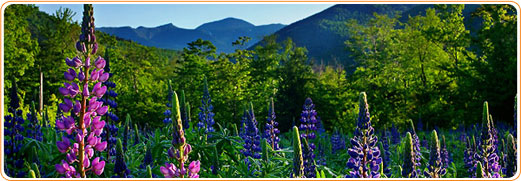 beautiful scenery in the mount washington area image